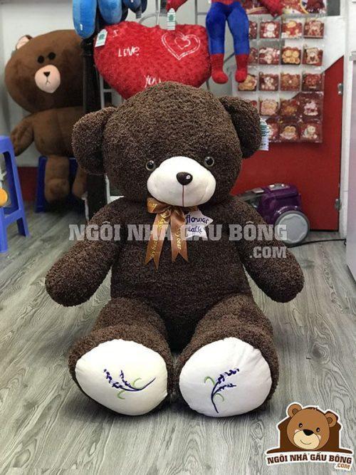 Teddy Đắp Sao