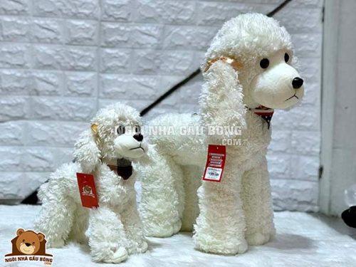 Chó Bông Poddle