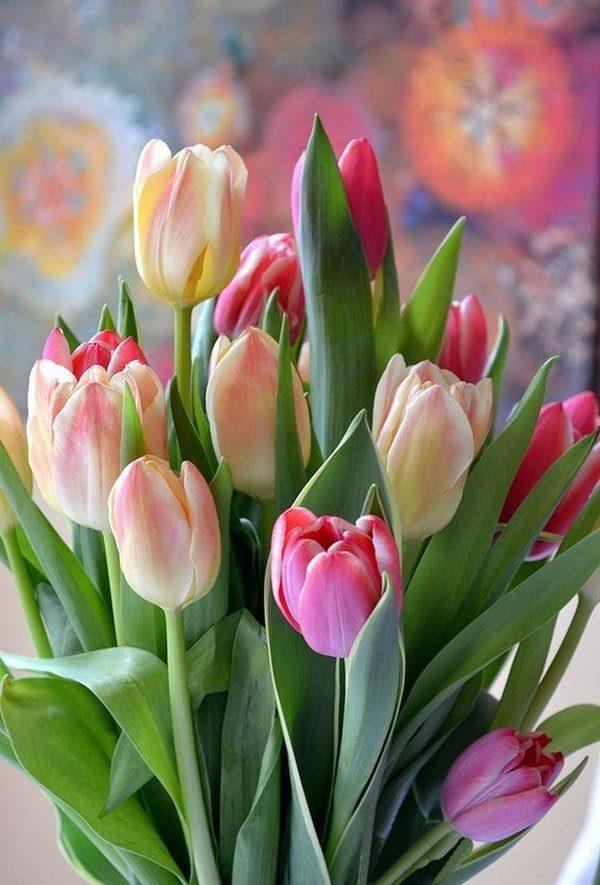 Ngoài những lời chúc 20/11, đừng quên những đóa hoa tươi thắm